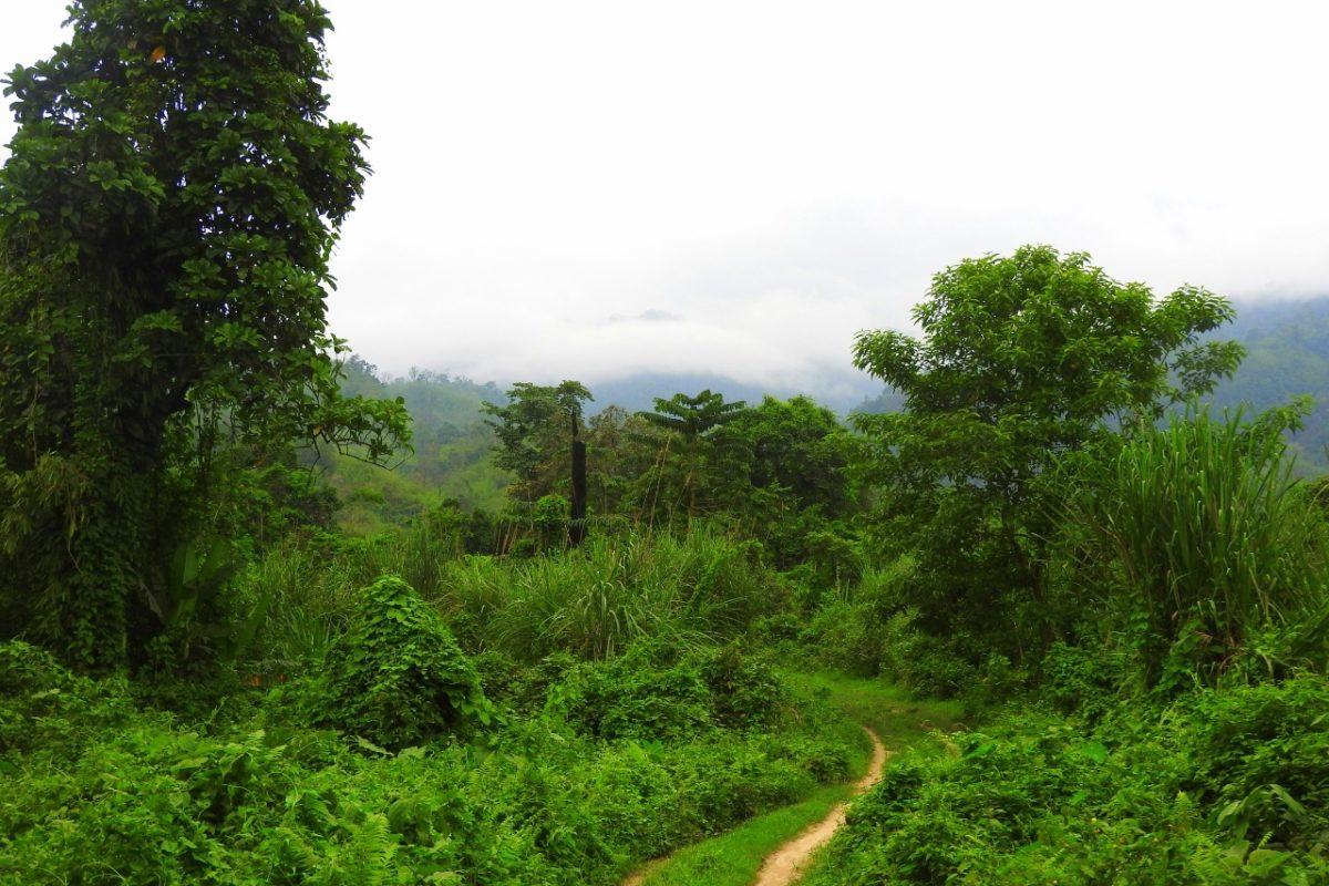 The Behali Reserve Forest on the Assam-Arunachal border was established in 1917. Photo by Dipankar Borah.