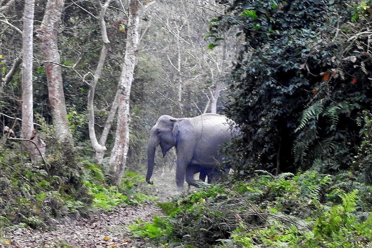 Asian elephant with a calf. Photo by Ranjit Kakati.