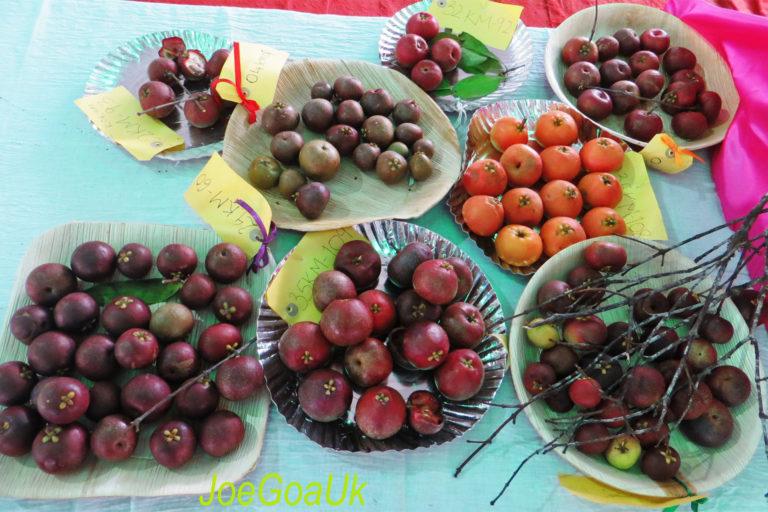 "Kokum fruits on display at the Konkan Fruit Fest of 2014. <a href=""https://www.flickr.com/photos/joegoauk71/14053800850/"" target=""_blank"" rel=""noopener"">Photo</a> by Joegoauk Goa/Flickr."
