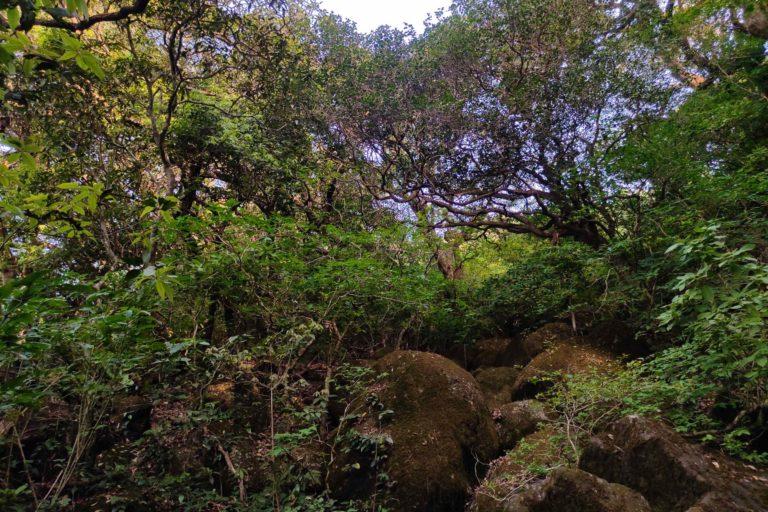 Croton gibsonianus habitat. Photo by M. Dhabak.