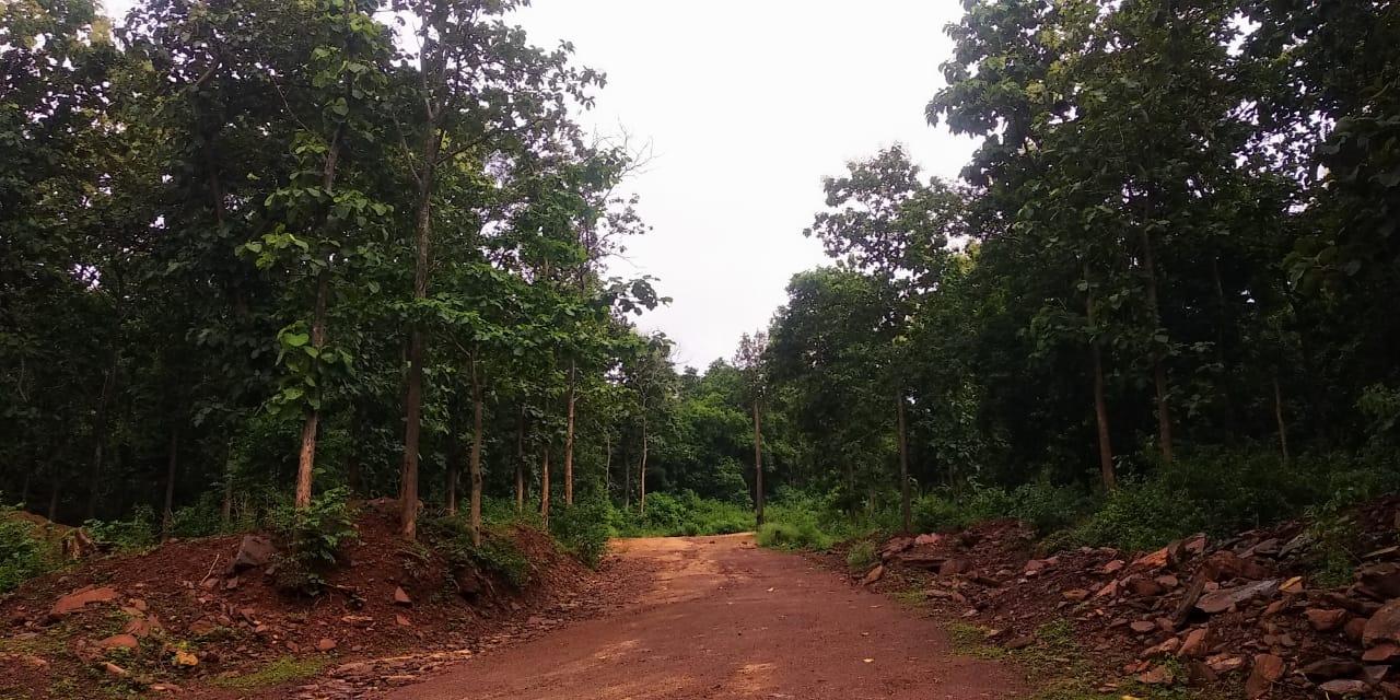The heavily forested area of Amdai Ghati in Narayanpur, Chhattisgarh. Photo by Rajendra Kumar Mahavir.