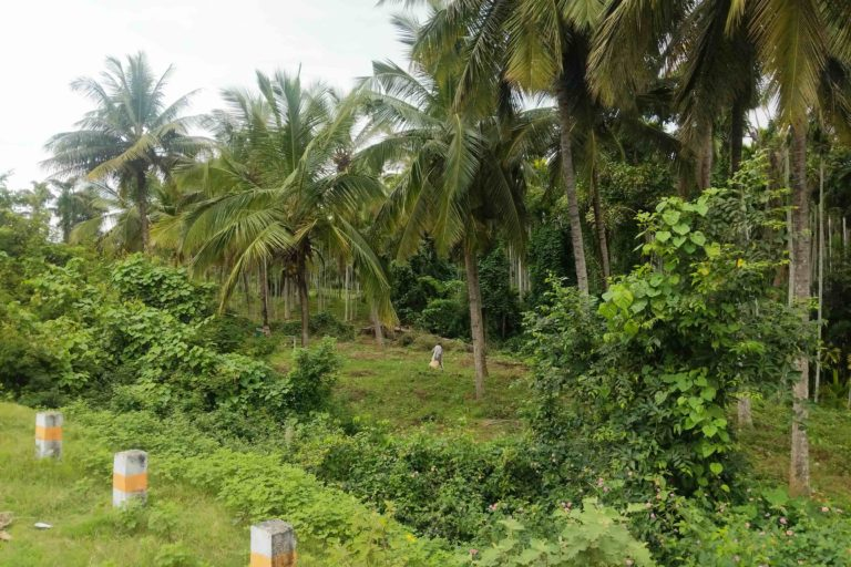 : Areca and coconut plantations pepper Ugane village on the foothills of Western Ghats in Hassan district of Karnataka. Photo by Mohit Rao.