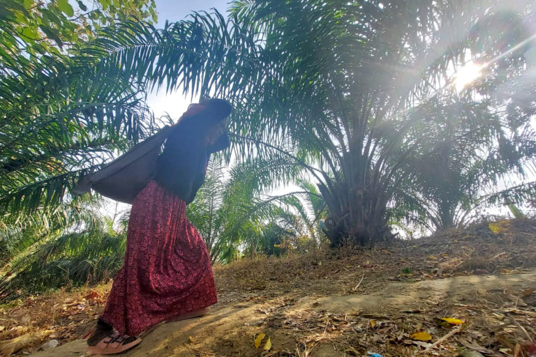 A woman returning from a market crosses a palm oil plantation in Damparengpui village, Mamit district, Mizoram. Photo by Gaurab Talukdar.