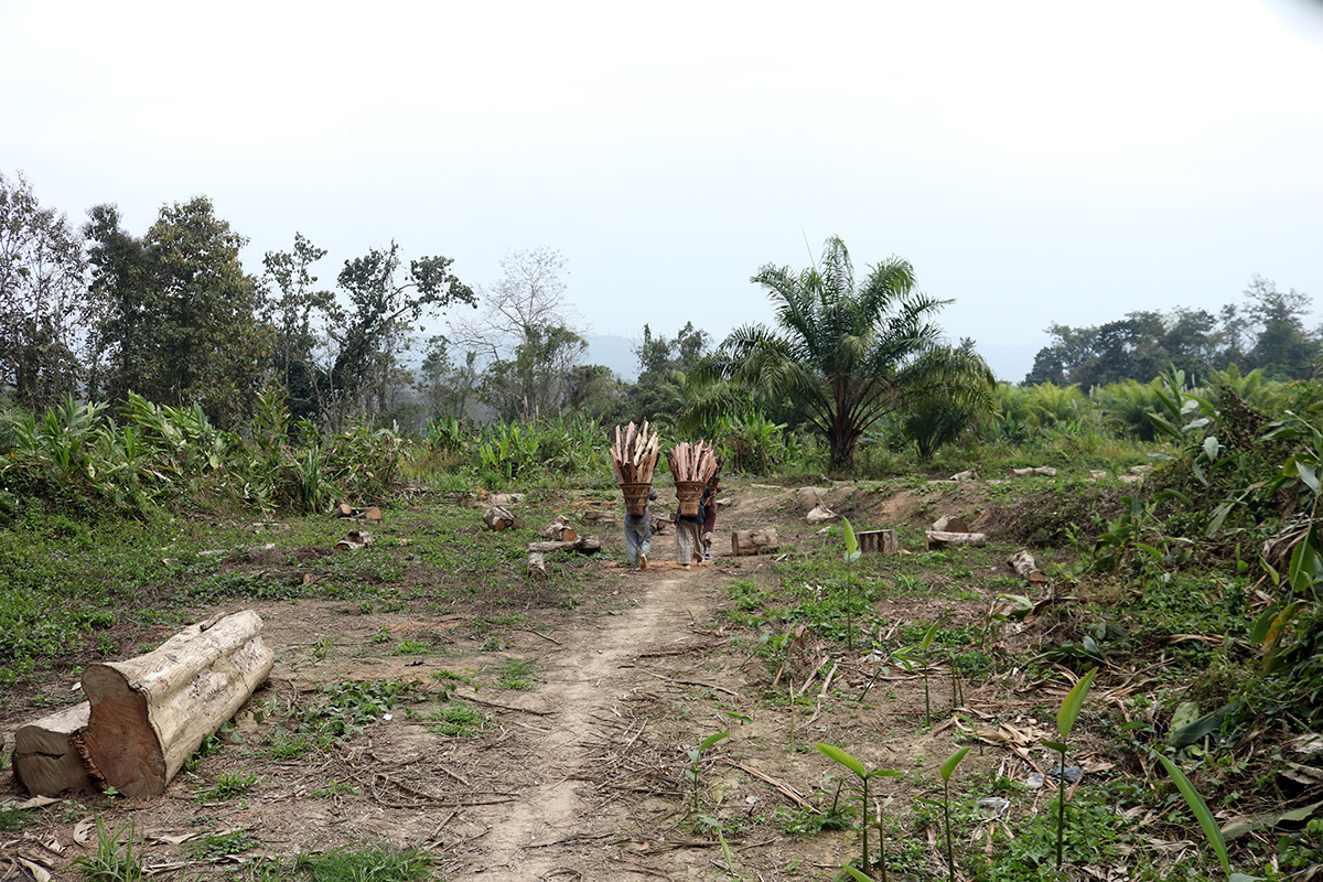 Land cleared for palm oil plantation in Darlak, Mamit District, Mizoram. Photo by Lalvohbika.