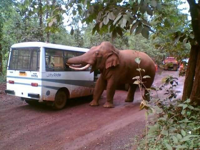 An elephant near a busy road in Keonjhar. Photo by Rasanand Behera.