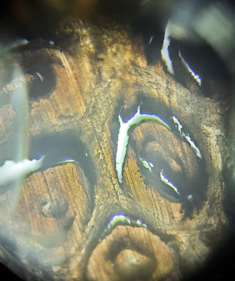Microscopic view of a rhino horn. Photo by Rathin Barman.