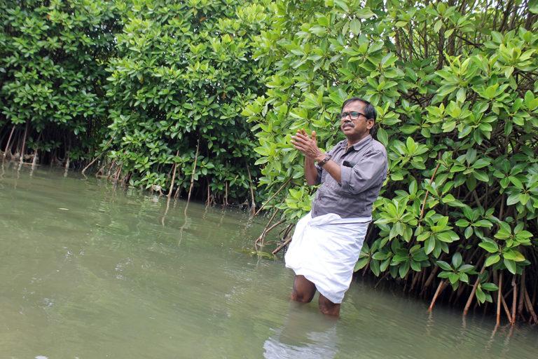 Anandan Paithalen in front of mangroves planted by his father, Kallen Pokkudan, at Choodatt backwater region in Kannur. Photo by J U Bhavapriya.