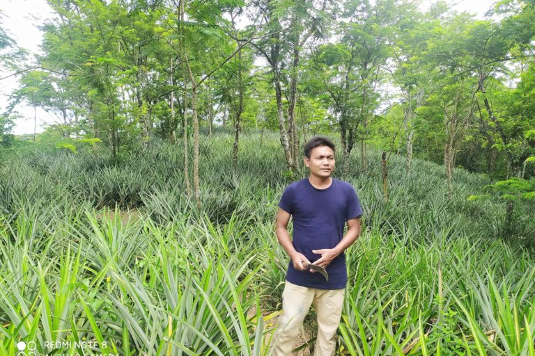 Theophilus Khojol gets ready to harvest pineapples in his agroforestry land in Assam. Photo by Animekh Hazarika.