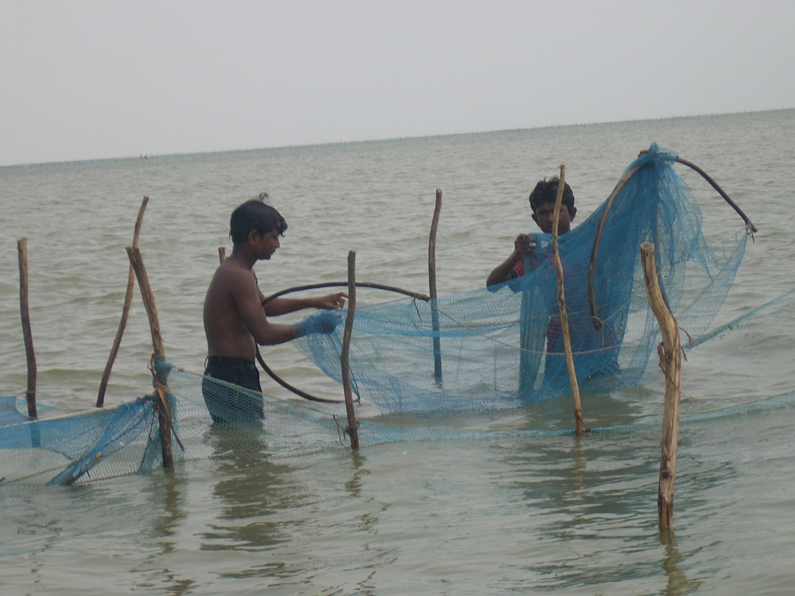 During the four months of monsoon, fisher folks catch ginger prawn in the LRK. Photo by Dhvanit Pandya/AHRM.