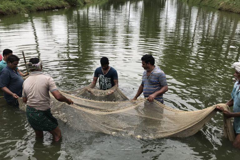 An aqua farm in Andhra Pradesh