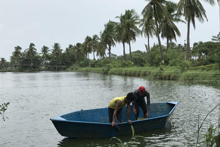 Fishermen feeding the fish in the aquaculture farm.