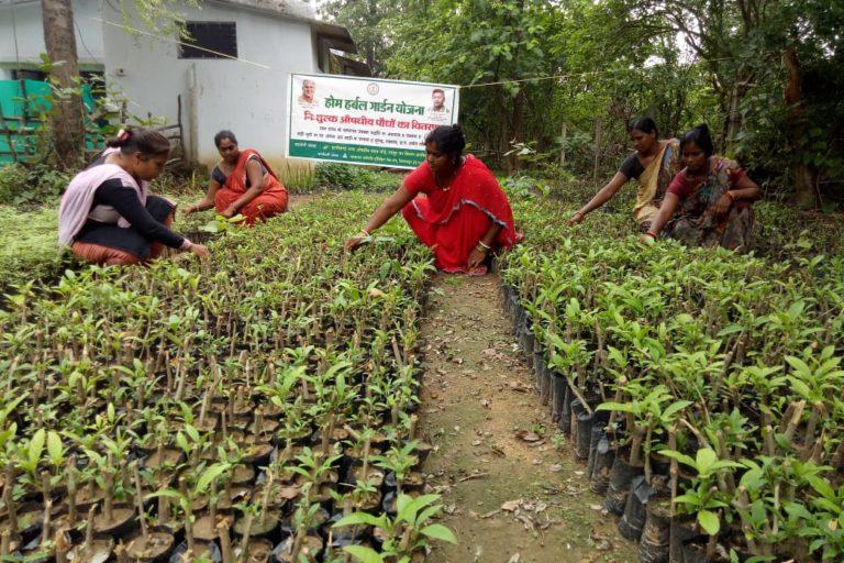 प्राकृतिक चिकित्सा से इलाज के लिए बगीचे में औषधि तैयार करती महिलाएं
