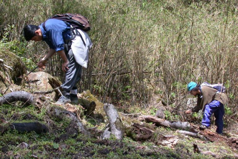 तीस्ता नदी के किनारे शोधकर्ताओं ने मेढ़क की प्रजातियों की पहचान की। फोटो-