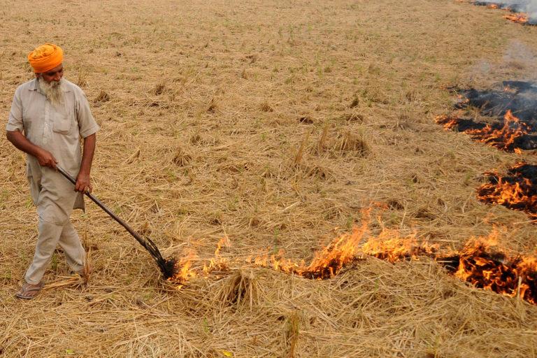 पटियाला के एक गांव में पराली जलाता हुआ किसान