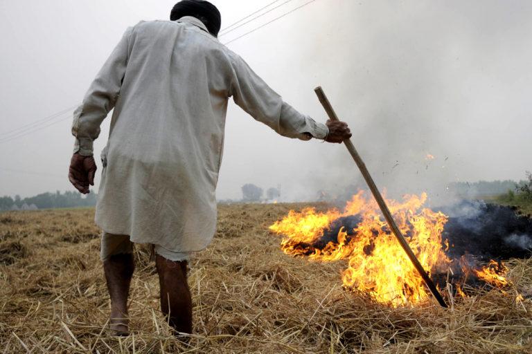 पंजाब में पराली जलाता हुआ एक किसान। फोटो- विशेष प्रबंध