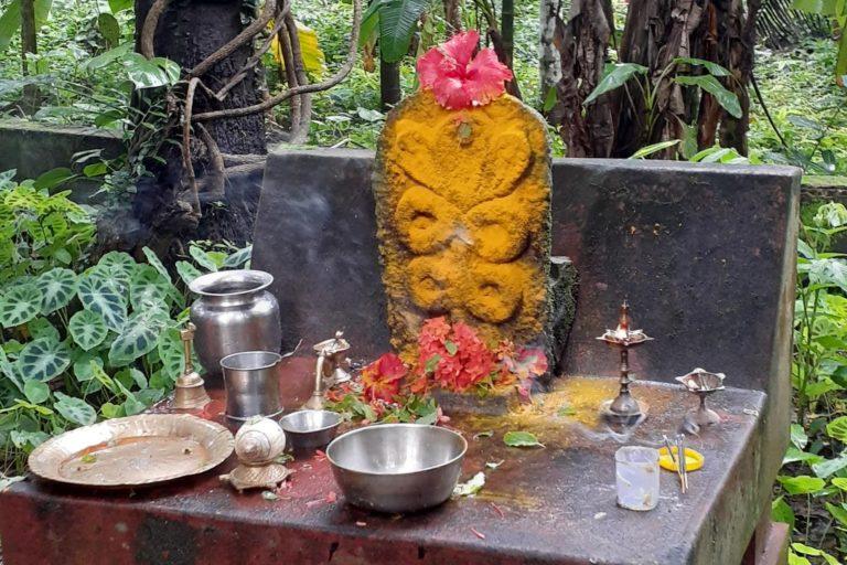 पानी, दूध, चावल के घोल और हल्दी से सर्प देवता की पूजा की जाती है। फोटो- यू. प्रशांत बल्लुलल्या