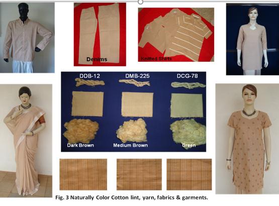 रंगीन कपास के प्रयोग से इस तरह के कपड़े तैयार किए जा सकते हैं। इस चित्र को ग्राफिक्स के माध्यम से दर्शाया गया है। फोटो- यूएडी धारवाड
