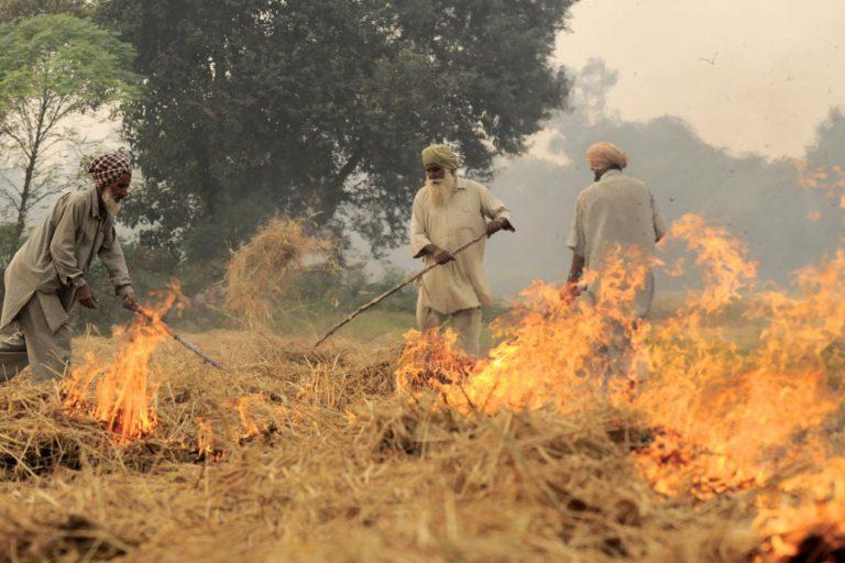 भारत में किसान धान की फसल लेने के बाद पराली को इस तरह जलाते हैं। इसकी वजह से भी प्रदूषण में काफी बढ़ोतरी होती है। फोटो- नील पाल्मर (सीआईएटी)/ विकिमीडिया कॉमन्स