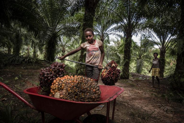 पाम ऑइल 10 वर्ष की बच्ची सामेला कभी स्कूल नहीं जा पाई। वह अपनी दादी के साथ बेवेल देगुल के ताड़ के खेत में काम करती है। फोटो- अल्बर्टस वेम्ब्रिएन्टो