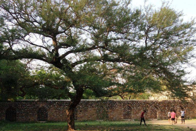 महरौली पुरातत्व पार्क में एक पुराने पेड़ के नीचे खेलते बच्चे। फोटो- दीपन्विता गीता नियोगी