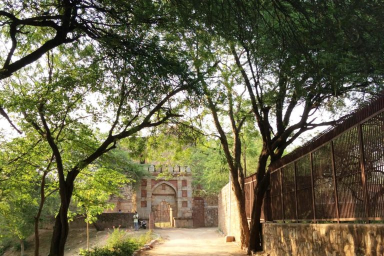 महरौली पुरातत्व पार्क में सड़क के किनारे एक कतार में पेड़ लगे हुए हैं। फोटो- - दीपन्विता गीता नियोगी