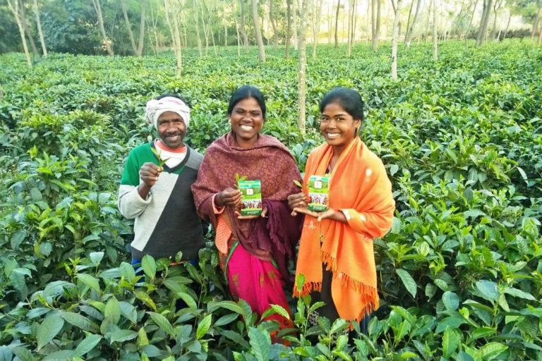 छत्तीसगढ़ की चाय इसी बागान से आती है। यह बागान वन विभाग द्वारा जशपुर के सारूडीह गांव में एक दशक पहले बना था। फोटो- वन विभाग