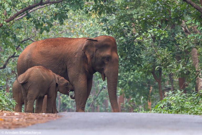 बैनर तस्वीर- कुल्हिया वाइल्ड लाइफ सेंचुरी ओडिशा से लगी सड़क पर हाथी। फोटो - अरिंदम भट्टाचार्य/फ्लिकर