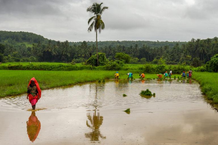 वर्ष 2020 में अच्छी बारिश हुई लेकिन लॉकडाउन की वजह से किसानों की आय प्रभावित हुई। इस समय कई मांगो के साथ किसान आंदोलनरत हैं। फोटो- राजश्री मित्रा/फ्लिकर