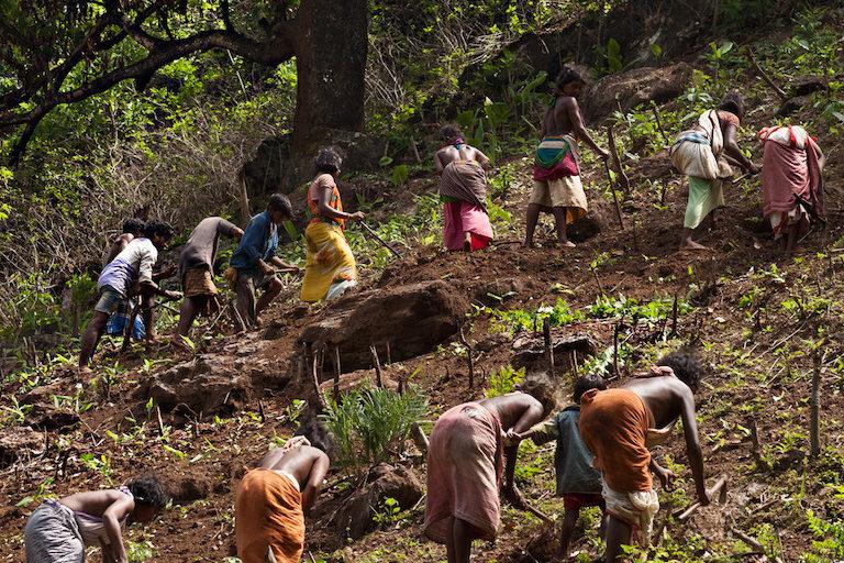 हुतेसी गांव में एक ही खेत में साथ काम करते डोंगरिया किसान। तस्वीर- इंद्रजीत राजखोवा