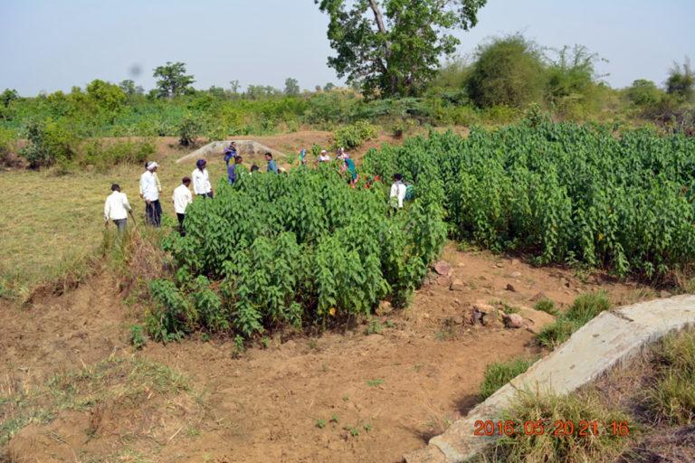 बेशरम के पौधों की वजह से कामखुरा गांव के तालाब का यह हाल हो गया था। गांव के लोगों ने इसे हाथ से हटाकर तालाब को मुक्त किया। तस्वीर- बीएनवीएसएएम