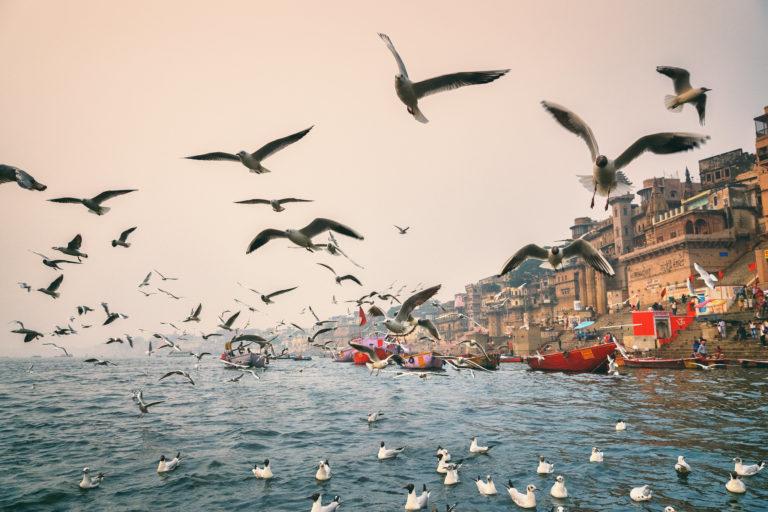 काशी के गंगा घाट पर प्रवासी पक्षियों की वजह से प्रकृति का खूबसूरत नजारा देखने को मिलता है। तस्वीर- प्रभु बी/फ्लिकर