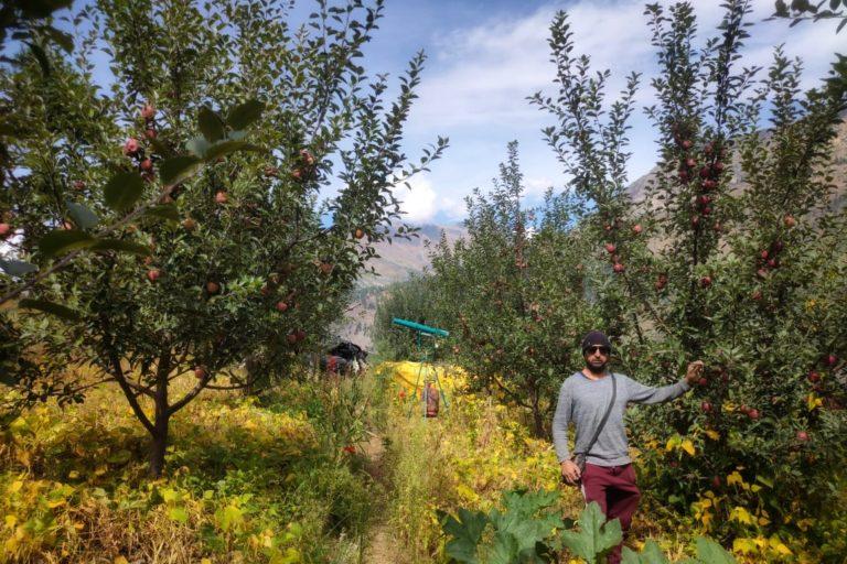 मौैसम अनुकूल रहने पर कभी उत्तरकाशी का धराली गांव इस कदर सेब के बगीचों से गुलजार होता था। तस्वीरः सचेंद्र पंवार