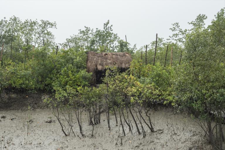 बनबीबी का मंदिर। स्थानीय लोग वन देवता को अपना रक्षक मानते हैं। तस्वीर- कार्तिक चंद्रमौली/मोंगाबे