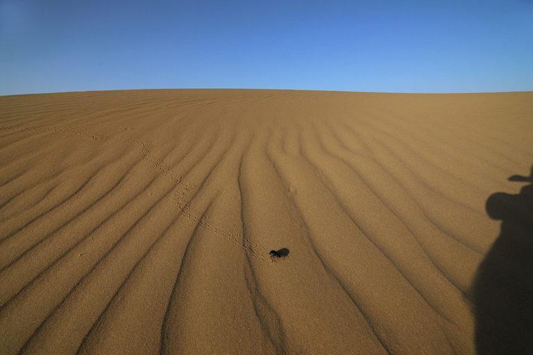 रेत के धोरे पर एक डंग बीटल के गुजरने के बाद उसके निशां। तस्वीर- डॉ. गोबिंद सागर भारद्वाज