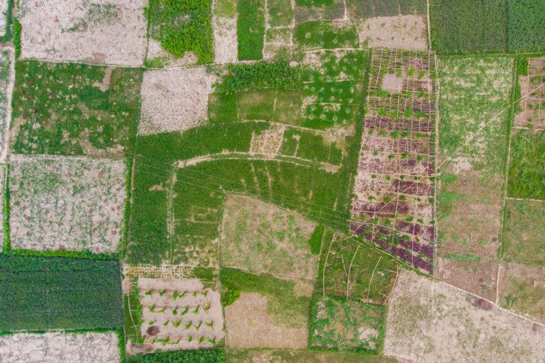 मुजफ्फरपुर जिले में बागमती नदी के किनारे के खेत। स्थानीय लोग मानते हैं कि यहां की जमीन बागमती की वजह से उपजाऊ है। किसानों को आशंका है कि तटबंध बनने के बाद मिट्टी की उर्वरक क्षमता भी प्रभावित होगी। तस्वीर- मेट्रो मीडिया/आईडब्लूएमआई/फ्लिकर