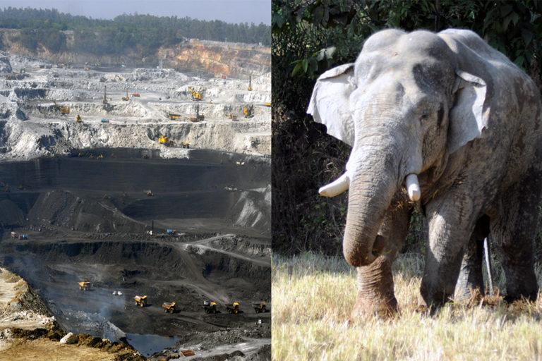 हसदेव अरण्य में लेमरु हाथी रिजर्व: कोयले की चाह, सरकारी चक्र और पंद्रह साल का लंबा इंतजार