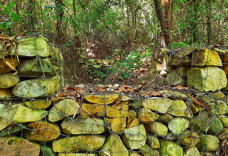 शुक्लापुर जंगल में करीब 46 हेक्टेयर क्षेत्र में जगह-जगह चेकडैम बनाए गए। इससे जंगल पुनर्जीवित हो उठा। तस्वीर- वर्षा सिंह