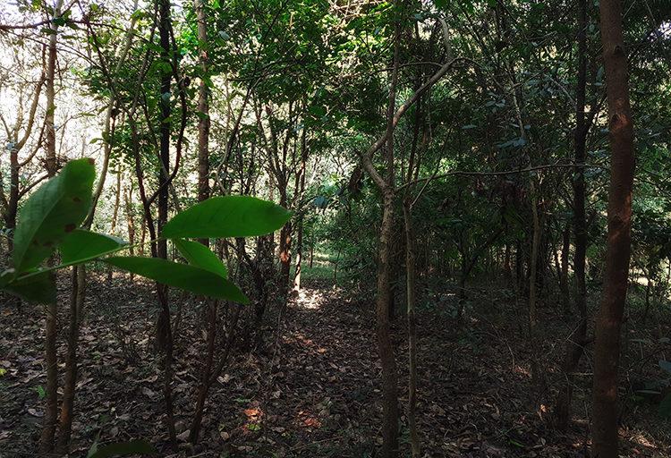समुदाय की भागीदारी से पिछले दस वर्षों में शुक्लापुर जंगल एक बेहतरीन वन मॉडल बन गया है। तस्वीर- वर्षा सिंह