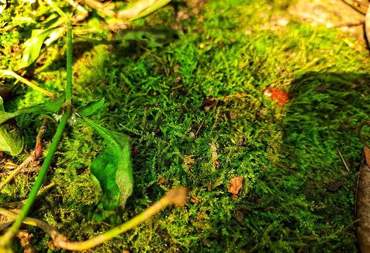 जंगल में पानी रोकने के लिए बनाए गए जलछिद्र और पौध रोपण से मिट्टी की नमी लौटी। तस्वीर- वर्षा सिंह