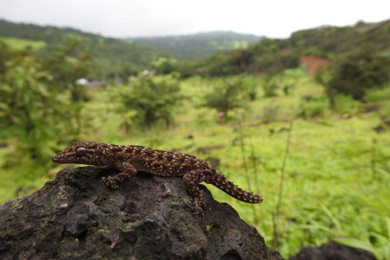 कोविड के साथ राष्ट्रीय कार्यक्रम से जैव-विविधता और इसके संरक्षण की बढ़ी उम्मीद