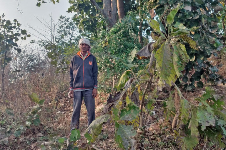 मध्यप्रदेश के आदिवासी समाज के लोग यहां के जंगलों की विविधता बचा रहे हैं। तस्वीर- सहाना घोष