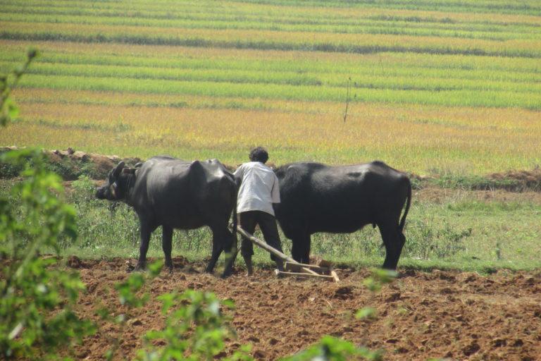 पीएम किसान योजना: क्या झारखंड के आदिवासी किसानों के साथ हो रहा सौतेला व्यवहार?