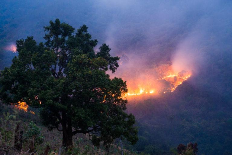 ओडिशा के रायगड़ा के जंगलों में वर्ष 2014 में लगी आग का दृष्य। इस साल भी ओडिशा के सिमलीपाल बायोस्फीयर रिजर्व में लगी आग से मार्च महीने में भारी तबाही मची। तस्वीर- सौरभ चटर्जी/फ्लिकर