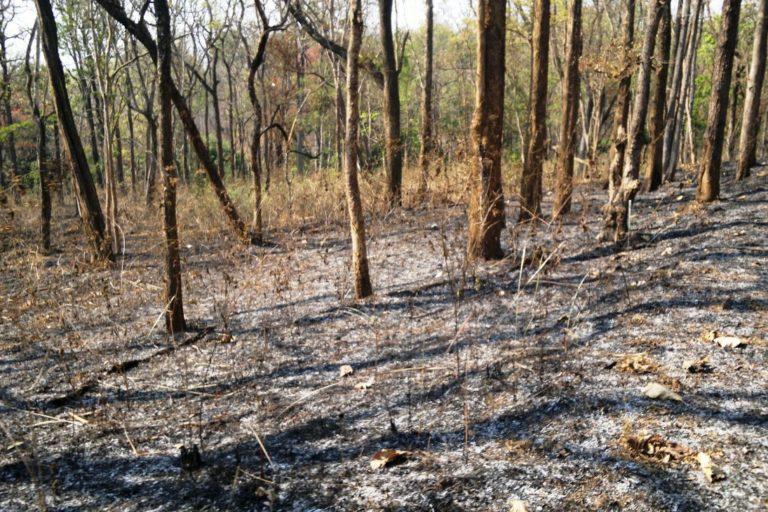 केरल का वायनाड वाइल्डलाइफ सेंचुरी। जंगल में बिखरे सूखे पत्ते आग में घी का काम करते हैं। तस्वीर- जसीम हमजा/फ्लिकर