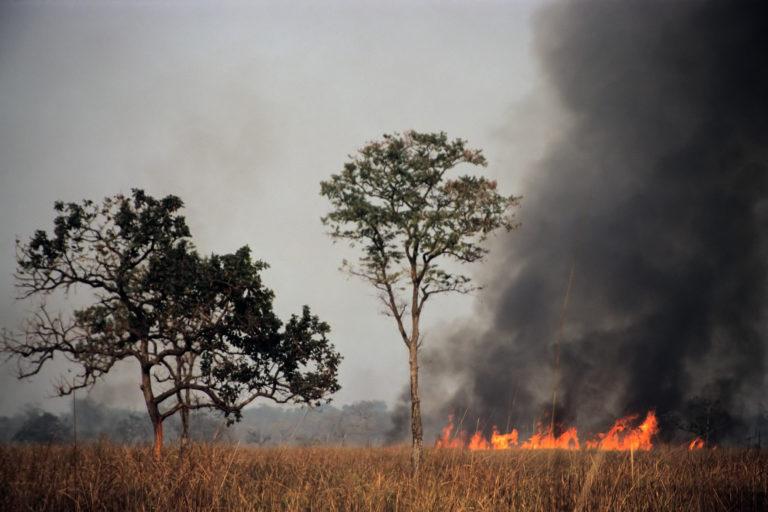 असम के काजीरंगा नेशनल पार्क में वर्ष 2009 में भीषण आग लगी थी। जंगल की आग का असर जैव-विविधता के साथ-साथ अर्थव्यवस्था पर भी पड़ता है। तस्वीर- जीनोजेफ/विकिमीडिया कॉमन्स