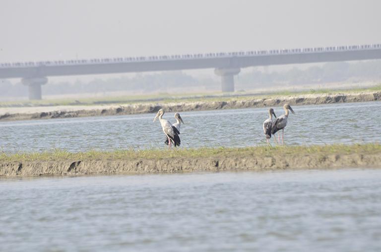 गंडक नदी में अच्छी खासी जैव विविधता पाई जाती है। यह नदी रिवर डॉल्फिन, हॉगडियर के साथ-साथ 50 प्रजाति की मछलियां और 40 प्रजाति की पक्षियों का आशियाना भी है।