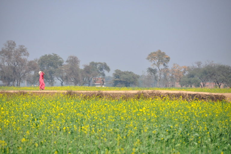 बिहार के जामनापुर गांव की तस्वीर। नवंबर, 2019 में सरकार ने जलवायु संकट का सामना करने में सक्षम नये फसल चक्र की शुरुआत की। सरकार का दावा है कि इस नये फसल चक्र को अपनाकर राज्य के किसान जलवायु संकट का सामना कर पाने में सक्षम होंगे और मौसम के अप्रत्याशित बदलाव से सुरक्षित रहेंगे। तस्वीर- पी कैसियर (सीजीआईएआर)/फ्लिकर