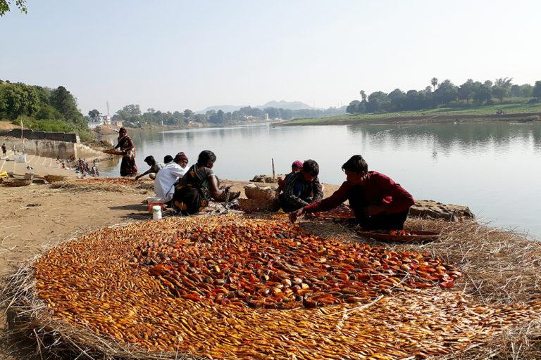 मंडला में किला वार्ड समिति के मछुआरे छोटी मछलियों को आग में भूंजने की तैयारी करते हुए। इन भुंजी हुईं मछलियों को महिला मछुआरिन बाजार में बेचती हैं। तस्वीर: राजकुमार सिन्हा