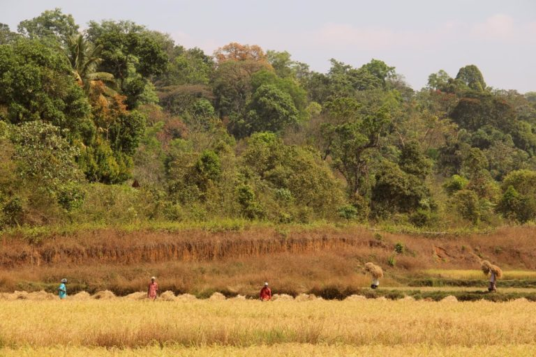 पेंच टाइगर रिजर्व के आस-पास कृषि-वानिकी के लिए तैयार हैं किसान, सबके लिए है फायदे का सौदा