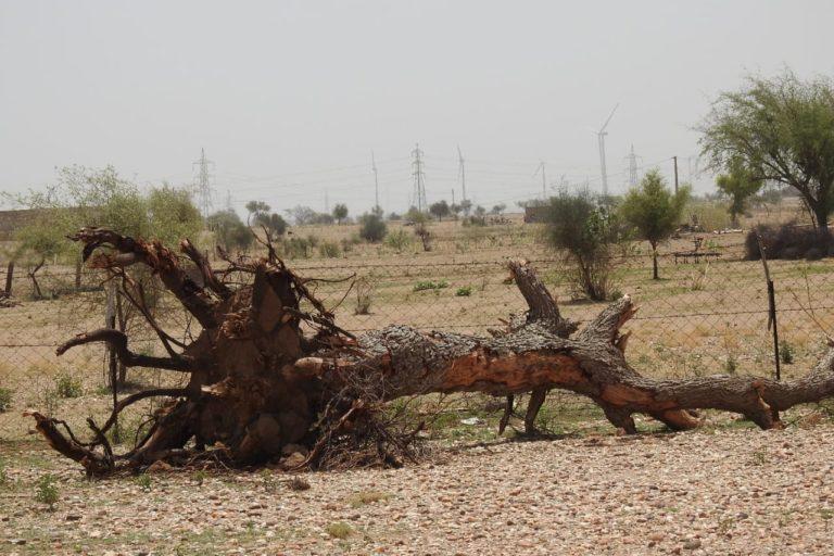ओरण बचाने के लिए ग्रामीणों का संघर्ष साल 1999 से ही चल रहा है। इसकी शुरुआत तब हुई जब एक निजी सोलर पावर कंपनी ने काम शुरू किया और ओरण की भूमि से पेड़ काटने शुरू किए। तस्वीर- सुमेर सिंह भाटी